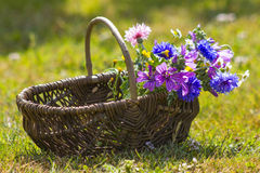 Wildflowers in a basket Stock Image
