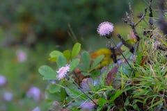 Wildflowers. Beautiful spring colors of wildflowers Stock Image