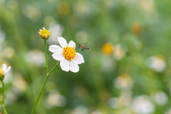 Wildflowers and bee Royalty Free Stock Images