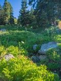 Wildflowers in Bergweide royalty-vrije stock foto's