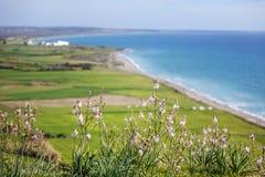 Wildflowers bianchi contro il mare blu e le colline verdi, beautifu fotografia stock