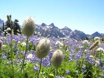 Wildflowers bij Mt. Regenachtiger royalty-vrije stock afbeelding