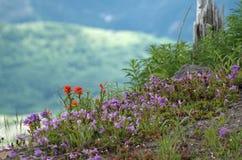 Wildflowers bij Mt. St. Helen royalty-vrije stock foto's