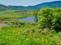 Wildflowers bij 8000 Voet Stock Afbeeldingen