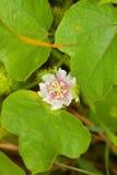 Wildflowers blancos Fotos de archivo libres de regalías
