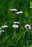 Wildflowers blandos fotografía de archivo