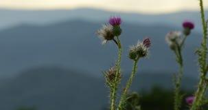 Wildflowers Blauw Ridge Mountains bij Zonsondergang stock video