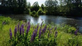 Wildflowers blisko jeziora Zdjęcie Stock