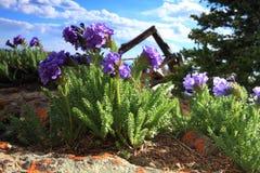 Wildflowers in bloei Royalty-vrije Stock Foto's