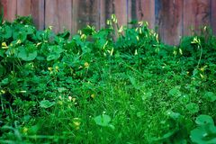 Wildflowers in Bloei voor Rustieke Houten Omheining Stock Foto's