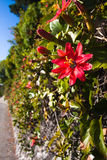 Wildflowers blooming in the country road. Red Wildflowers blooming  in the country road Royalty Free Stock Photography