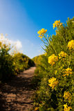 Wildflowers blooming in the country road. Yellow Wildflowers blooming  in the country road Royalty Free Stock Image