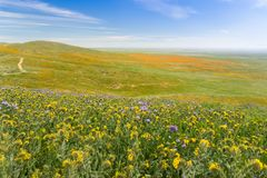 Wildflowers blooming on the hills in springtime, California stock photography