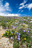 Wildflowers Blooming in Summer Stock Photos