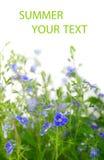 Wildflowers blu Fotografie Stock Libere da Diritti