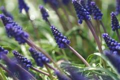 Wildflowers blu Immagine Stock