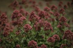 Wildflowers bonitos Imagen de archivo libre de regalías