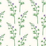 Wildflowers. Botanical pattern with branches of the field flower. Wildflowers. Botanical seamless pattern with branches of the field flower Stock Image
