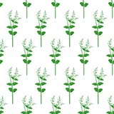 Wildflowers. Botanical seamless pattern with flower field branches. Flower background. Wildflowers. Botanical seamless pattern with flower field branches Royalty Free Stock Image