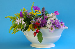 Wildflowers. A bouquet of wildflowers for a blue background royalty free stock photo