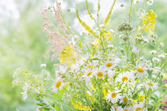 Wildflowers Stock Photo