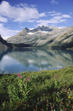 Wildflowers at Bow Lake in Canadian Rockies Royalty Free Stock Images