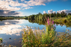 Wildflowers a Branton Lakes immagini stock