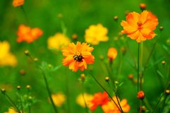Wildflowers in the Breeze with Bumble Bee Stock Image