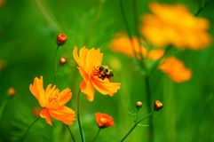 Wildflowers in the Breeze with Bumble Bee Royalty Free Stock Photos