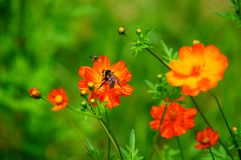 Wildflowers in the Breeze with Bumble Bee Royalty Free Stock Photography
