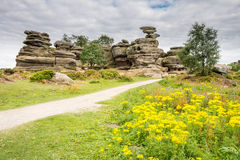Wildflowers at Brimham Rocks. Brimham Rocks on Brimham Moor in North Yorkshire are weathered sandstone, known as Millstone Grit,creating some dramatic shapes Stock Images