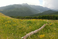 Wildflowers in Bucegi Mountains from Lom Valley. Field of blooming wild flowers in shadow of Bucegi Mountains from Lom Valley on sunny day Stock Image