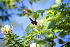 Wildflowers and a Butterfly. Fragrant wildflowers and a black butterfly Stock Photography