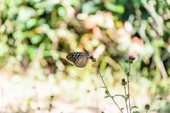 Wildflowers butterfly royalty free stock photography