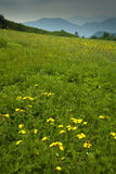 Wildflowers at Carver's Gap. TN-NC stock photography