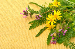 Wildflowers, chamomiles, milfoil on yellow sacking background Stock Images