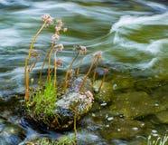 Wildflowers che crescono in una corrente Immagine Stock Libera da Diritti