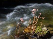 Wildflowers che crescono in una corrente Fotografia Stock Libera da Diritti