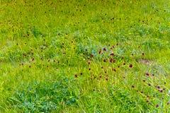 Wildflowers che fioriscono nel prato Fotografia Stock
