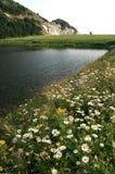 Wildflowers chez Presqu'ile images stock