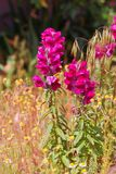 Wildflowers. In a clearing grow very beautiful wildflowers Royalty Free Stock Images