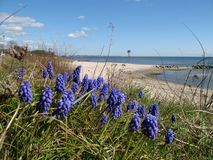 Wildflowers by coast. Wildflowers by sandy beach against blue sky Royalty Free Stock Photo