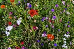 Wildflowers colorés dans le domaine Photographie stock
