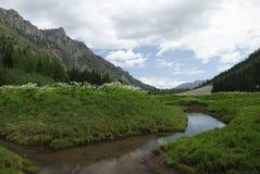 Wildflowers in Colorado Rocky Mountains Stock Photos