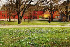 Wildflowers and colorful buildings Uppsala, Sweden royalty free stock image