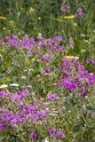 Wildflowers coloridos Fotos de Stock