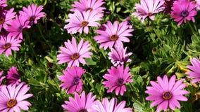 Wildflowers coloridos almacen de metraje de vídeo