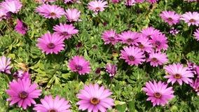 Wildflowers coloridos metrajes