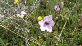 Wildflowers coloridos almacen de video
