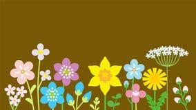 Wildflowers coloridos alinhados, fundo marrom Fotografia de Stock